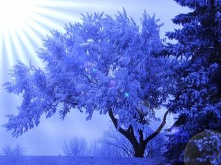 зима, дерево, блики, солнечные лучи, иней