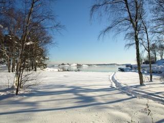 снег, деревья, зима, тропа
