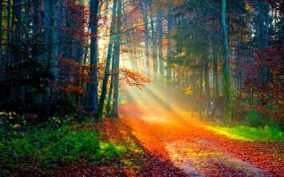 лес, солнечный свет, осень
