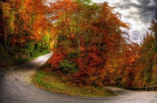 природа, небо, осень, лес, пейзаж, облака, деревья