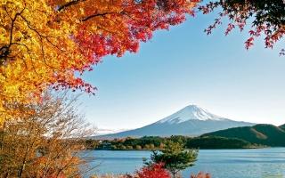 Фудзияма, осень, горы, деревья, желтые листья