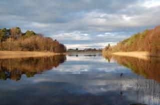 река, гладь, осень, деревья