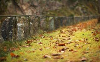 оранжевые листья, трава, травинки, грусть, осень, Сезон