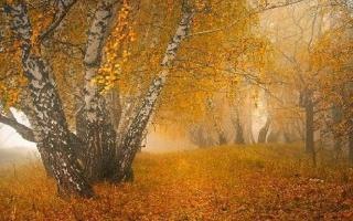 осень, деревья, желтые, туман
