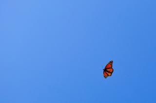 blue, butterfly, minimalism, flight, the sky, Orange