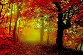 осень, лес, деревья, туман