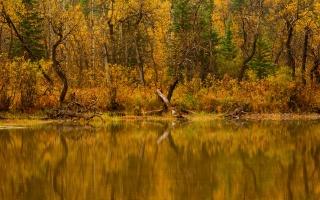 река, вода, деревья, природа, лес, осень