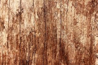 strom, textura, dub