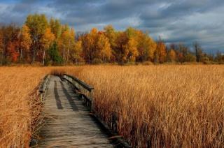 тропа, осень, красивое фото, пейзаж, золотистое поле