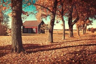 дом, глубокая осень, красота, осенний мотив, листва