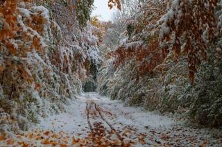листья, снег, осень, лес