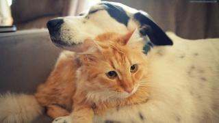 kočka, pes, přátelství