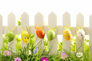jaro, tráva, květiny, VEJCE, příroda, velikonoce