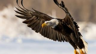 крила, політ, птиця