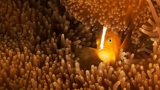 кораллы, рыба, вода