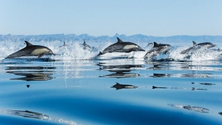 дельфины, море