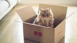 torode, box, cat