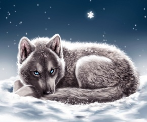 wolf, lies, snow, winter, blue eyes, snowflakes, looks