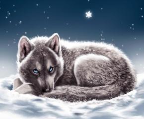 волк, лежит, снег, зима, голубые глаза, снежинки, смотрит