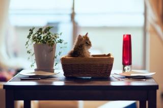 стол, корзина, ben torode, Дейзи, котенок, цветок, кошка