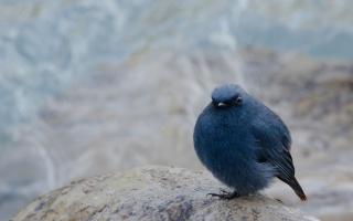 bird, background, stone, blur, sitting, bun