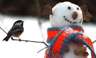Tit, bird, snowman, winter, scarf, twigs, snow