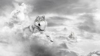 wolf, castle, white, art
