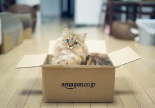 Daisy, c benjamin torode, cat, box, game