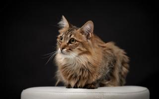 kočka, pohled, pozadí