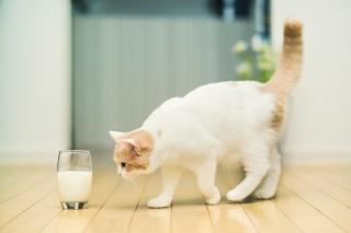 mléko, kočka, hannah, sklenici, c ben torode