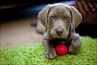 pohled, míč, štěně