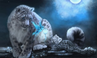 Leopard, kotě, pták, svítilna, měsíc, noc