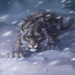 Leopard, predator, ambush, eyes, winter, snow, Blizzard