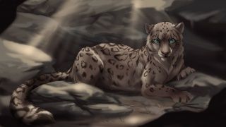 Leopard, stones, lies, blue eyes