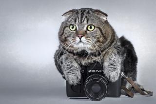 кот, фотоаппарат