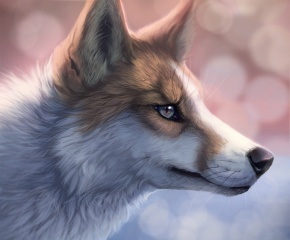 собака, рыжая, Белая, морда, взгляд