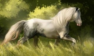Білий кінь, ГРИВА, трава, біг, грація
