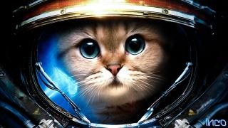 cat, The suit, Starcraft