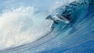 moře, vlna, dolphin