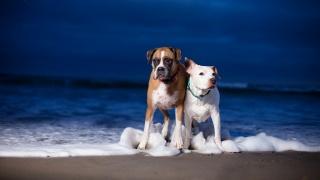 море, фон, собаки