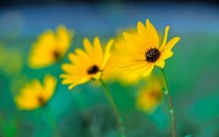 макро, размытие, цветы, боке, желтые, фокус