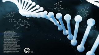 Krass, ДНК, ДНК