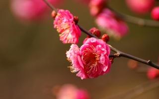 цветение, цветы, макро