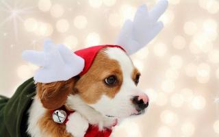 svátek, pozadí, pes