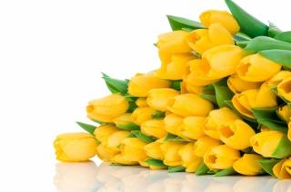 букет, бутоны, Жёлтые тюльпаны