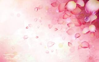 Pink, flower, petals, petal, beautiful
