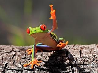 frog, green, greeting