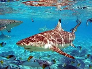 sea, tropics, shark