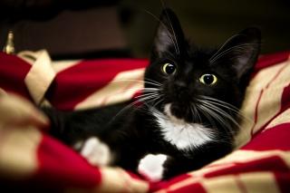 kotě, Sladké, Kotě, Červená, bílá, Kočka, černá, paw, deka, pet, červená, zvíře