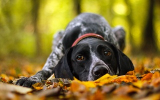 dog, each, autumn